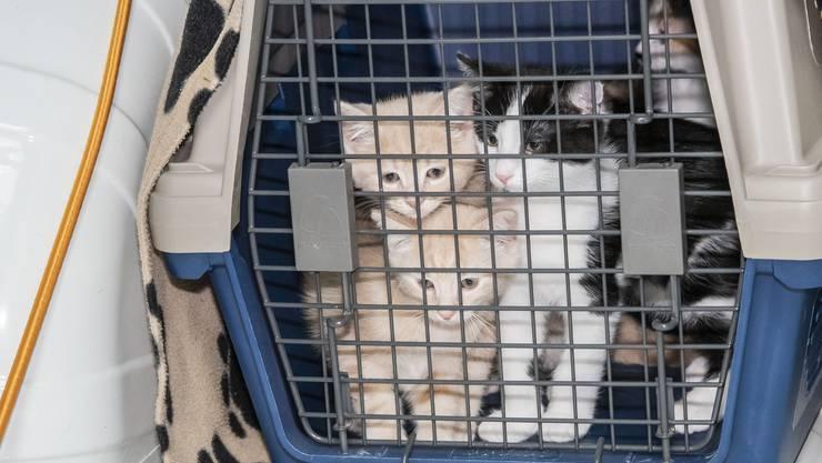 Die Katzen im Tierheim warten auf ein sicheres neues Zuhause.