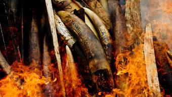 """""""Historischer Moment"""": Gabun verbrennt seine Bestände an beschlagnahmtem Elfenbein"""