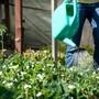 Jetzt juckt's Hobbygärterinnen und -gärtner in den Fingern. Die Arbeit im Garten kann aber gefährlich sein. (Symbolbild)