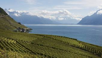 Weber will die Weinterrassen des Lavaux besser schützen (Archiv)