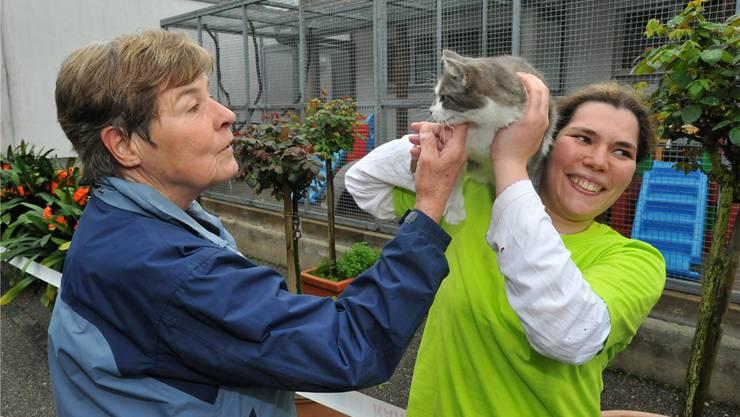 Katzen waren im Geschäfts- und Tierschutzjahr 2013 im Tierdörfli am häufigsten vertreten. Archiv