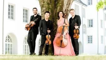 Das Stradivari-Quartett mit Sebastian Bohren (r.) kommt mit dem Schwung der Elbphilharmonie nach Brugg. Marco Borggreve/ZVG
