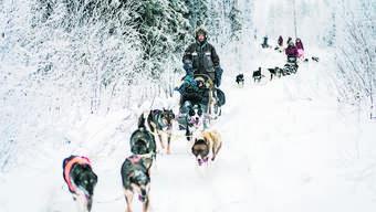Martina Schweizer absolvierte eine fünftägige Huskytour in Finnisch-Lappland, bei der sie für ein Hundegespann verantwortlich war.