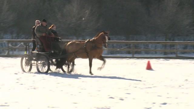 Letzte Schweizer Pferderasse
