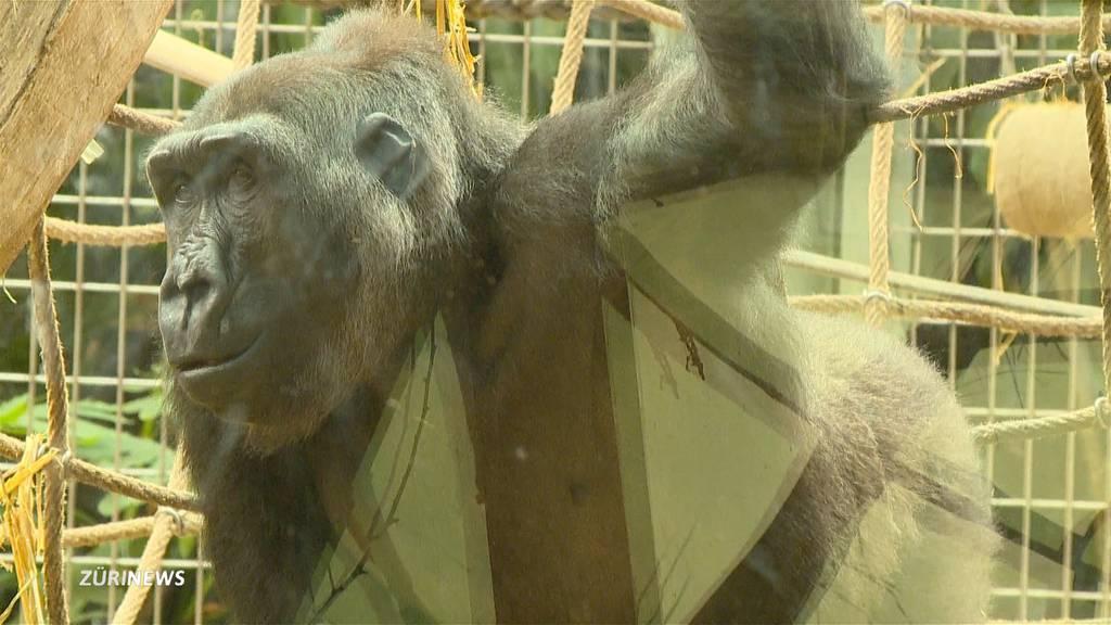 Affen und Pfauen bedauern den Zoo-Lockdown