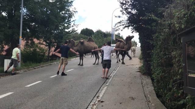 Auf Safari in Kallnach
