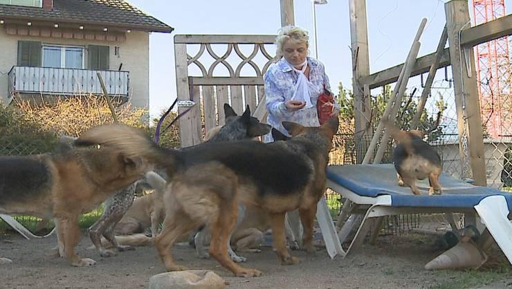 Christina van Steen mit ihren neun Hunden.Tele M1