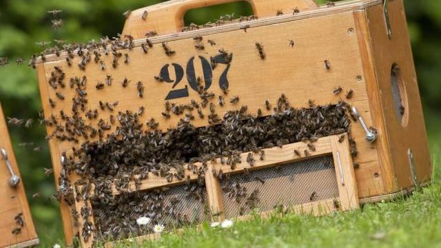 Mitschuld am Bienensterben tragen laut einer Studie der EU-Behörde EFSA auch gewisse Insektizide (Symbolbild)
