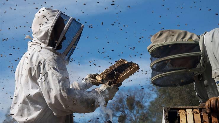 Szene aus Markus Imhoofs Film «More than Honey»: Er steht am Beginn der neuen Campuscinema-Reihe.