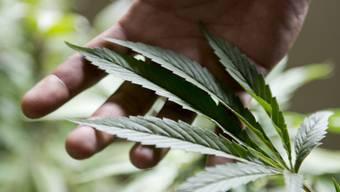 Städte sollen Freiheiten im Umgang mit Cannabis erhalten (Archiv)
