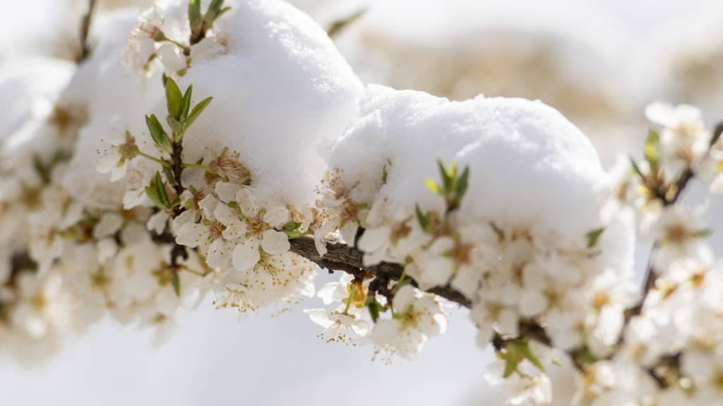 Erste Minustemperaturen - Schnee ab 1500 Metern