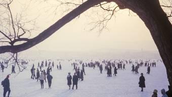 Seegfrörni Zürichsee 1963