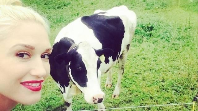 Die Kuh steht ihr gut: Gwen Stefani (Instagram)