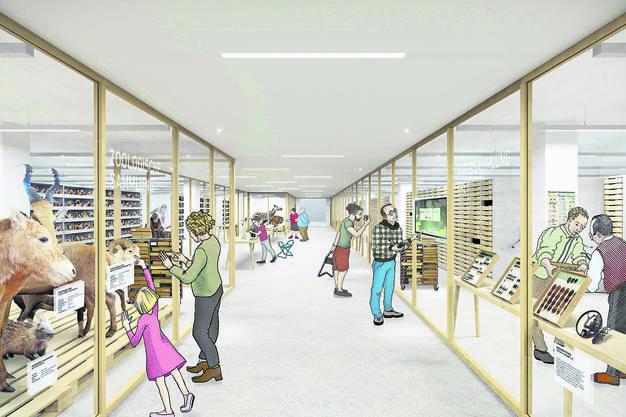 In den Gängen des künftigen Museums soll die umfangreiche Sammlung sichtbar gemacht werden. Illustration: pitschmann.ch