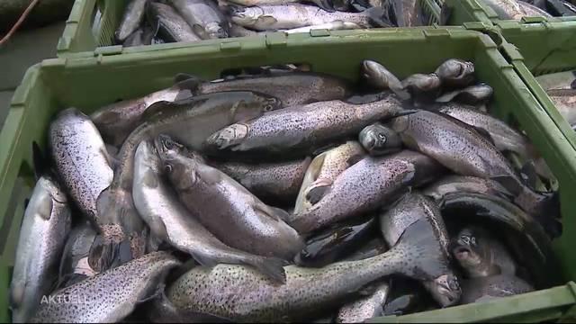 Ermittlungen eingestellt: Tausende Fische qualvoll gestorben