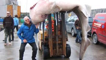 Der alte Mann und der Fisch: Joe Waldis und sein 480-Kilo-Hai. Mit von der flotten Angelpartie war auch noch ein zweiter Aargauer, wie sich jetzt herausstellte.