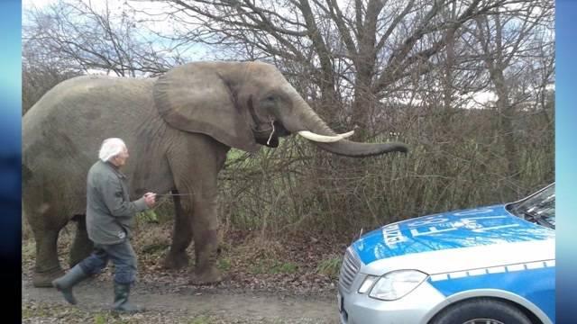 Elefanten Alarm in Waldshut