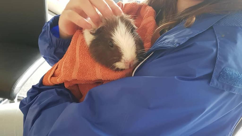 Tierfreunde bleiben auf Tierarzt-Rechnungen sitzen