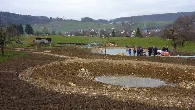 Das ausgedolte Bombergbächli, die Weiher, Trockensteinmauern und gepflanzte Heckensträucher bilden das neue Biotop.