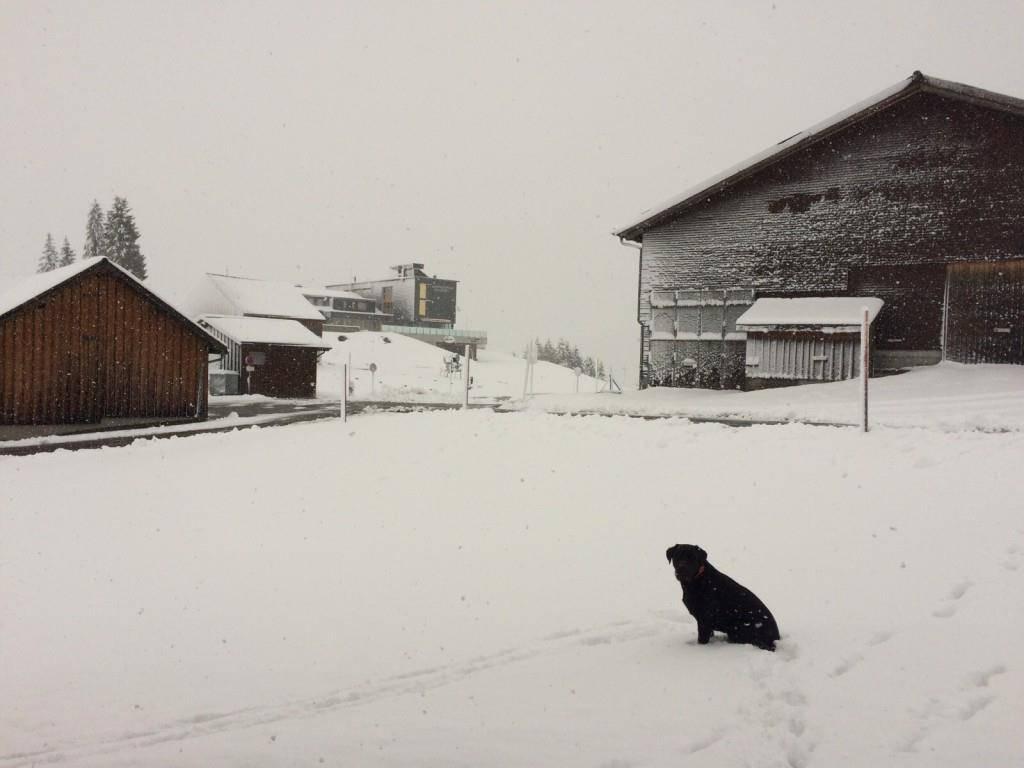 Schnee im Toggenburg