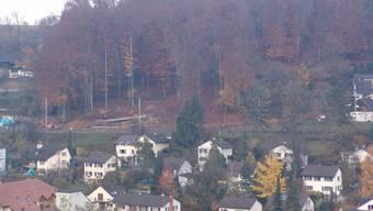 Neue Aussicht: Der Wald im Risihölzli wird fast gänzlich abgeholzt. (Bild: Flavio Fuoli)
