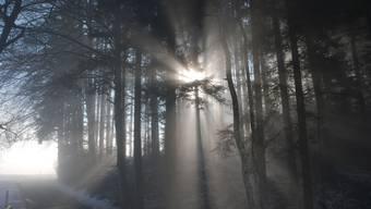 Auf dem Horben über dem Nebel