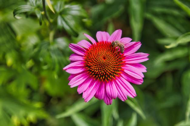 Blume mit Biene im Klostergarten Wettingen