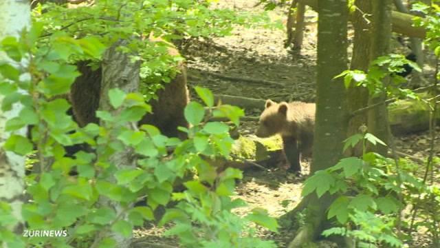 Bärennachwuchs im Tierpark Langenberg