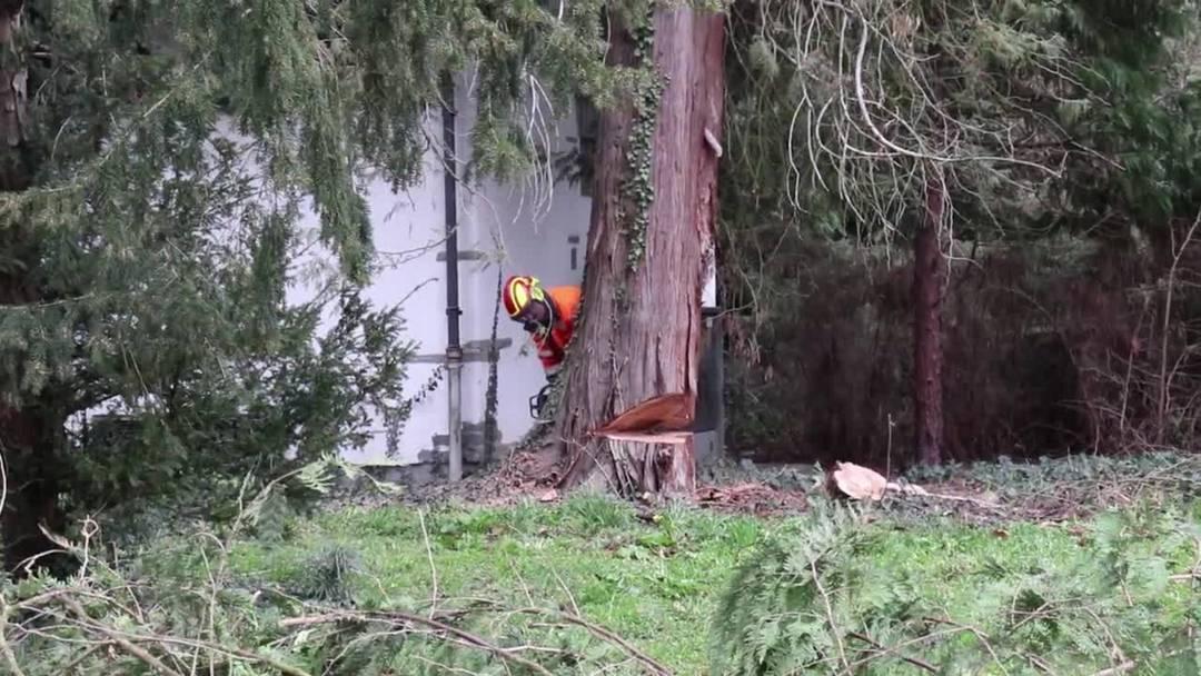 Kurpark Baden: Mit einem deutlichen Knirschen fiel der Baum