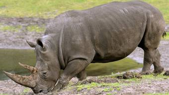 Für das Nashorn ist es fünf vor zwölf (Archiv)