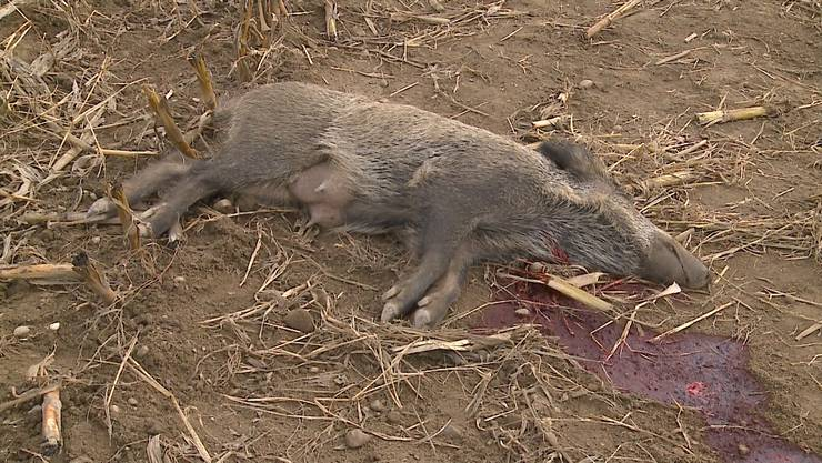 Der Jagdaufseher erlöste sie von ihrem Leiden.