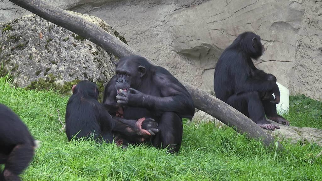 Mammutprojekt: Walter Zoo baut bis 2040 aus