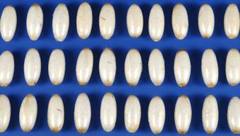 Die insgesamt importierte Menge an Kokain beläuft sich auf geschätzte 46 Kilogramm (Symbolbild)