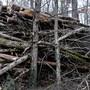 In unseren Wäldern liegt mehr Holz, als man verbrennen kann.