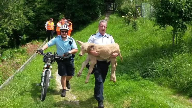 Die Polizei rettet ein Kalb von den Geleisen.