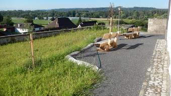 Die Neugestaltung des alten Friedhofs der Kirche Eggenwil.