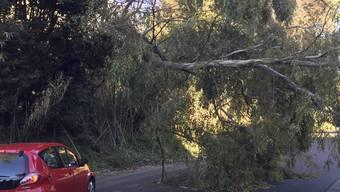 Nicht alle hatten so Glück wie dieser Autofahrer: Unwetter in Italien haben am Samstag mehrere Todesopfer gefordert.
