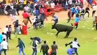 Die wildgewordenen Stiere gehen auf die Festbesucher los.