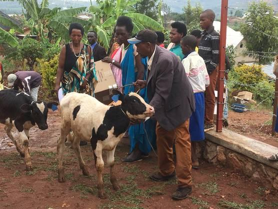 Die Stiftung stellt bedürftigen Familien Nutztiere zur Verfügung: Geissen, Schafe und Kühe. Jungtiere müssen weiter verschenkt werden.