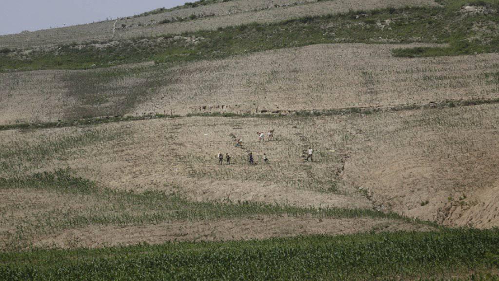 Bauern auf einem völlig ausgetrockneten Feld in Nordkorea. (Archivbild)