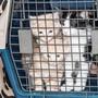 Während der Pandemie ist die Nachfrage an Katzenbabys massiv gestiegen.