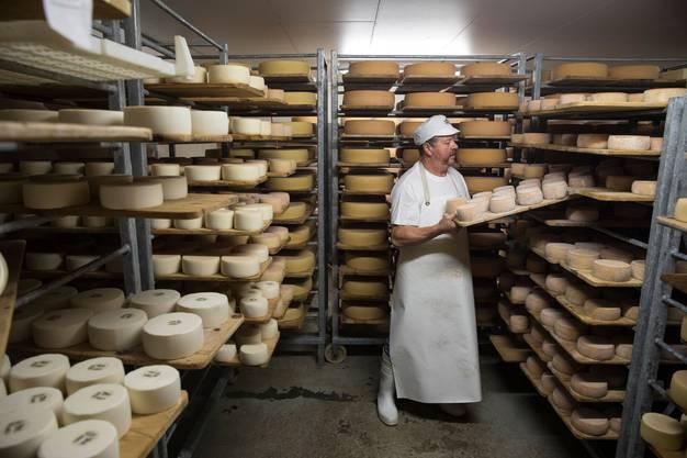 Sälmi Töngi verbringt seinen 44. Sommer auf der Alp. In seiner Käserei Gerschnialp produziert er pro Sommer bis zu 35 Tonnen Alpkäse. Bild: Oskar Enander