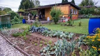 Pächter von städtischen Familiengärten müssen die Anlagen naturnah und nach biologischen Grundsätzen bewirtschaften. (Symbolbild)