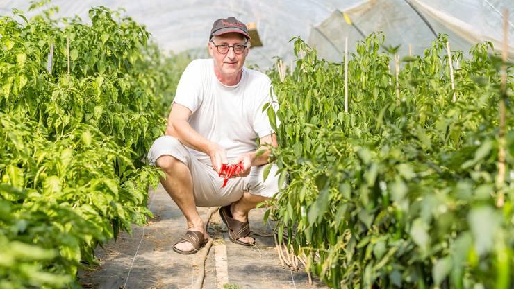 Erich Fischer aus Stetten arbeitet auf der Bank, betreibt aber nebenbei seit 2013 eine Chiliplantage auf dem Bauernhof von Thomas Koch.