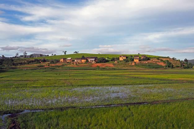Reisfelder entlang der Strecke