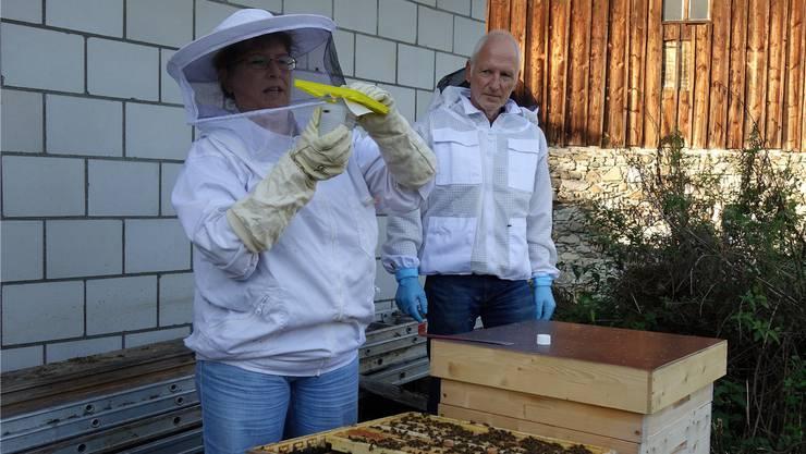 Desirée Ganarin zusammen mit Ausbildner Markus Müller bei der Bekämpfung der Varroa-Milbe in Mühlau.