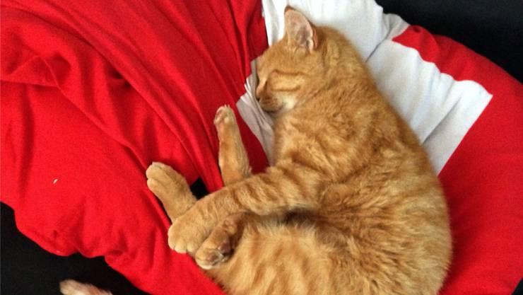 Wuschel schlief oftmals auf einem roten Tuch, das auf dem Sofa der Familie lag. ZVG