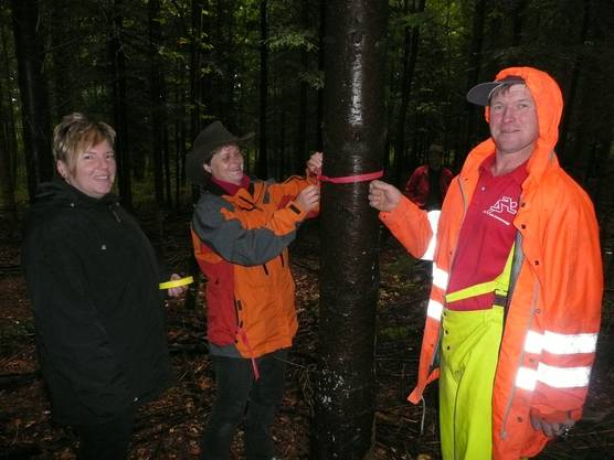 """Behördemitglieder der Bürgergemeinde Lohn lasen kürzlich die Zukunftsbäume in einer hiesigen Waldpartie nach der """"Z-Baum""""-Methode selber aus."""