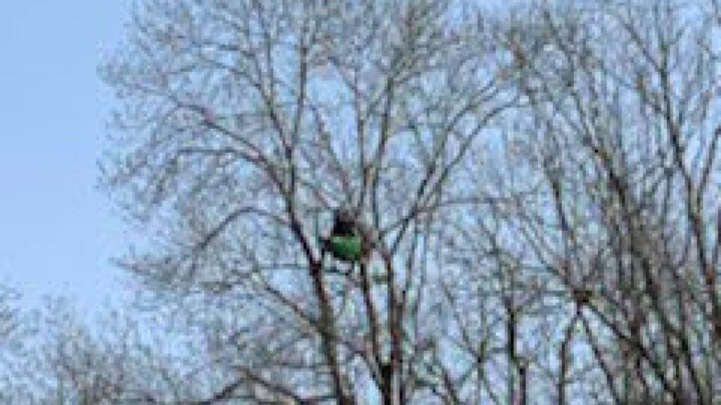 Zwei Aktivisten von Protest-Camp in der Waadt harren auf Baum aus