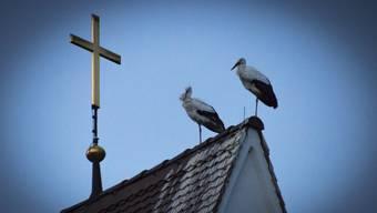 Vier Wochen vor Weihnachten gefällt es uns immer noch auf dem Dach der Kirche in Flumenthal. Auch das abendliche Glockengeläut bringt uns nicht aus der Ruhe.